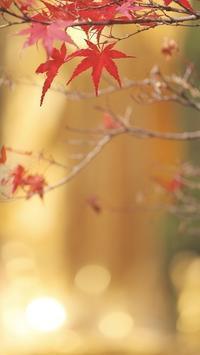 輝く時 - 赤煉瓦洋館の雅茶子