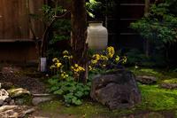 石蕗咲く庭(圓徳院) - 花景色-K.W.C. PhotoBlog