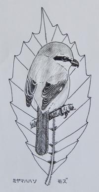 『#木の葉絵#leafart 』 深山柞・百舌 - スケッチ感察ノート (Nature journal)
