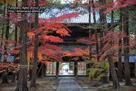曹源寺の紅葉 - 気ままな Digital PhotoⅡ