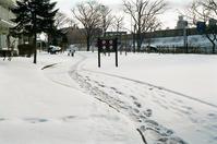 薄雪ならではの寒いこの頃と階段歩行降下 - 照片画廊