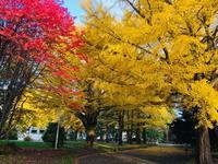 """2019年11月『北海道の秋、11月』 November 219 """"The Autumn of Hokkaido, November"""" - 小林皮膚科クリニック 院長ブログ"""