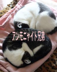 にゃんこ劇場「アンモニャイト兄弟」 - ゆきなそう  猫とガーデニングの日記