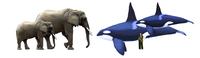 アフリカゾウとシャチ - アニマル情報202X