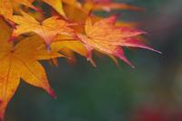 今日の小林楓樹園その2@安行 - meの写真はザンス