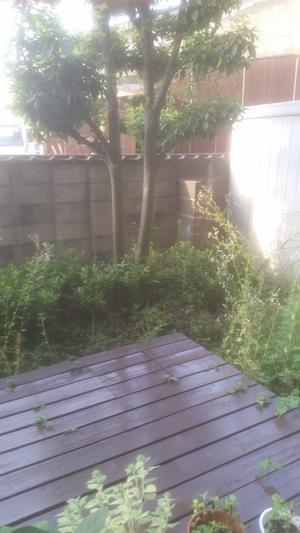 大改造しました - Chachakoの庭 (^-^)/