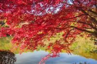 紅葉真っ盛り - あだっちゃんの花鳥風月