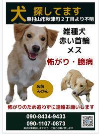 犬のみかんちゃん捜索のお願い(2019.12月) - きよせ猫耳の会(旧 飼い主のいない猫を考える会)