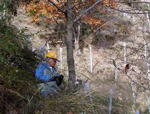持続可能なクヌギ林の再生を願いつつ台場クヌギを伐採する - 大屋地爵士のJAZZYな生活
