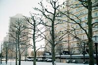 冬のプラタナスと芝生の足跡 - 照片画廊