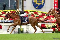 いよいよ明日、香港国際競走 - ホースバーエルコン HORSE BAR ELCON