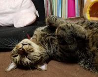 なぁなぁ? - キジトラ猫のトラちゃんダイアリー