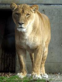 子育てが終わって - 動物園放浪記