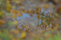 10月の山活⑬**比婆山から池の段に続く黄葉ワールド - きまぐれ*風音・・kanon・・