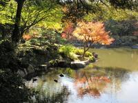 【東京紅葉めぐり2019】旧古河庭園・日本庭園のモミジ - お散歩アルバム・・新しい生活様式