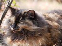 小春日和の猫たち - 三日おばさん