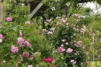 お見舞い募金送付と草ぶえの丘バラ園よりのお返事のご報告 - 駒場バラ会咲く咲く日誌