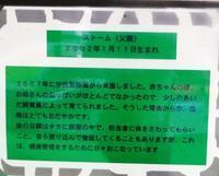 愛媛・とべ動物園のクロサイお父さんのストーム2019.11.28 - ごきげんよう 犀たち