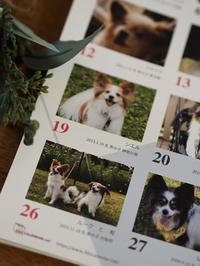 パピヨン365カレンダーが届きました - ロビンとルークと有のスローライフ ~episode2~
