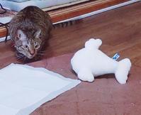 誰だ? - キジトラ猫のトラちゃんダイアリー