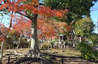 歳末の東金・中央公園 - 東金、折々の風景