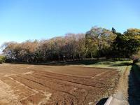 散策②(どんぐりの森) - 庭を眺めて…コーヒータイム