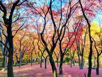 秋のおわり冬のはじまり - いぬのおなら