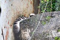 フク通信59(10月まとめ) - 動物園に嵌り中2