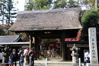 平林寺の紅葉 - 子猫の迷い道Ⅱ