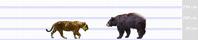 ジャガーとアメリカクロクマ - アニマル情報202X
