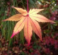 秋がいってしまう… - 侘助つれづれ
