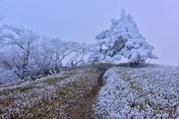 修験の山の霧氷山上ヶ岳 - 峰さんの山あるき