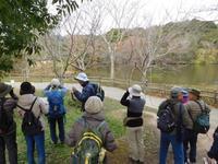 淡路島公園探鳥会 - 淡路島の野鳥ブログ...++