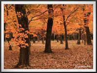 千本松牧場 隠れた紅葉の名所 - キルトとステッチ時々にゃんこ