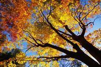 2019 平林寺の紅葉-4 - 自然と仲良くなれたらいいな2