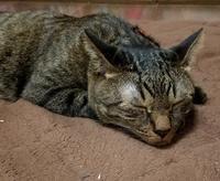 朝やけど - キジトラ猫のトラちゃんダイアリー