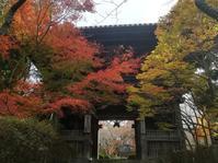 松尾寺山門と紅葉 - 散歩日和