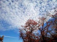 白い雲と最後の紅葉と - のんびり街さんぽ