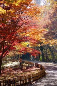 ラスト紅葉~神代植物公園 - 柳に雪折れなし!Ⅱ