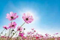 「幸せになる」ために必要な「4つの因子」 - Keiko Ishii のブログ
