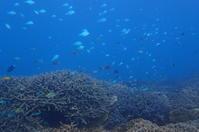 19.12.10保全活動 - 沖縄本島 島んちゅガイドの『ダイビング日誌』