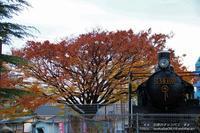 草加神社の黄葉は盛り過ぎて散り際がいいかな(^^♪ - 自然のキャンバス