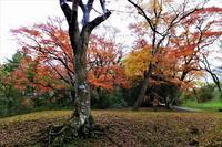 落葉 - ぶらり散歩 ~四季折々フォト日記~