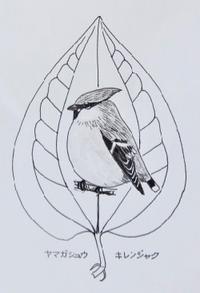 『#木の葉絵#leafart 』 山何首烏・黄連雀 - スケッチ感察ノート (Nature journal)