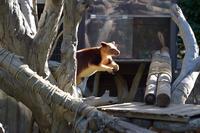 カンガルージャンプ - 動物園へ行こう