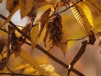 『木の実と水鳥と風景を・・・・・(木曽川水園)』 - 自然風の自然風だより