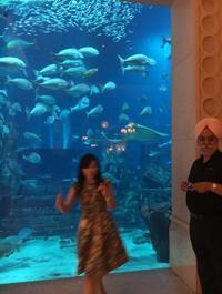 アトランティスザパーム⑤水族館 - かなりんたび