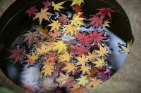 曇天もおススメ*旧古河庭園の紅葉さんぽ。 - MIRU'S PHOTO