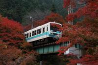 貴船神社の紅葉 - 浜千鳥写真館