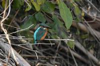 カワセミ調査・・・橋のポイント - 阪南カワセミ【野鳥と自然の物語】